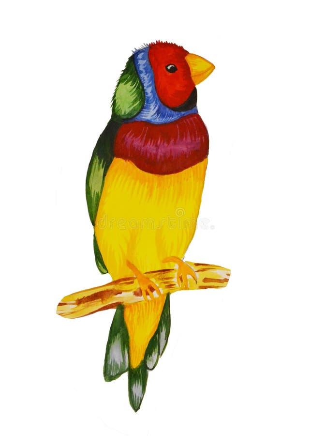 Watercolir多色鸟例证 一只大鸟坐分支 免版税库存图片