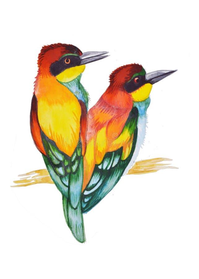 Watercolir多色鸟例证 两只鸟坐分支 免版税库存图片