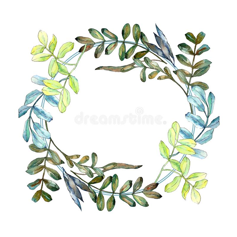 Watercolo green acacia leaves. Leaf plant botanical garden floral foliage. Frame border ornament square. stock illustration
