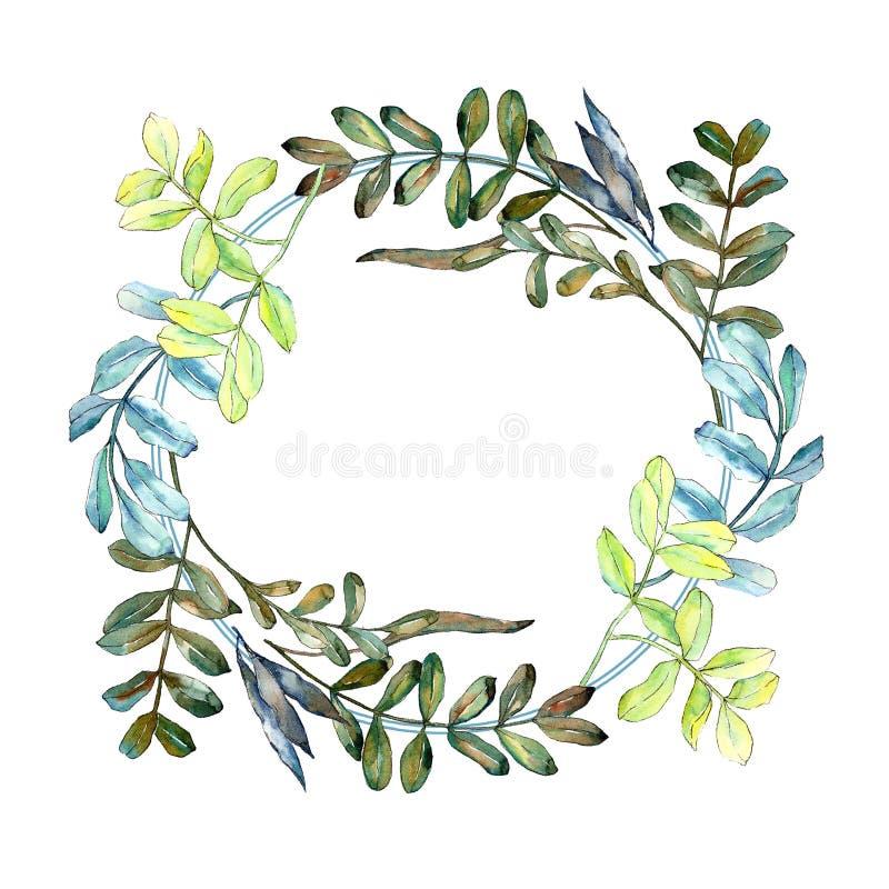 Watercolo zieleni akaci liście Liść rośliny ogródu botanicznego kwiecisty ulistnienie Ramowy rabatowy ornamentu kwadrat ilustracji
