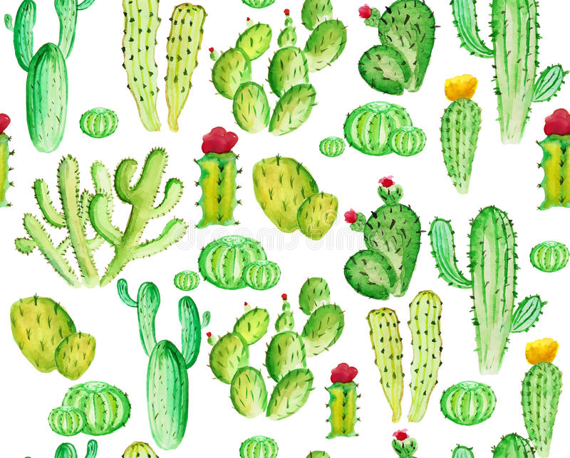 Watercoloe cactus seamles pattern. On the white background vector illustration