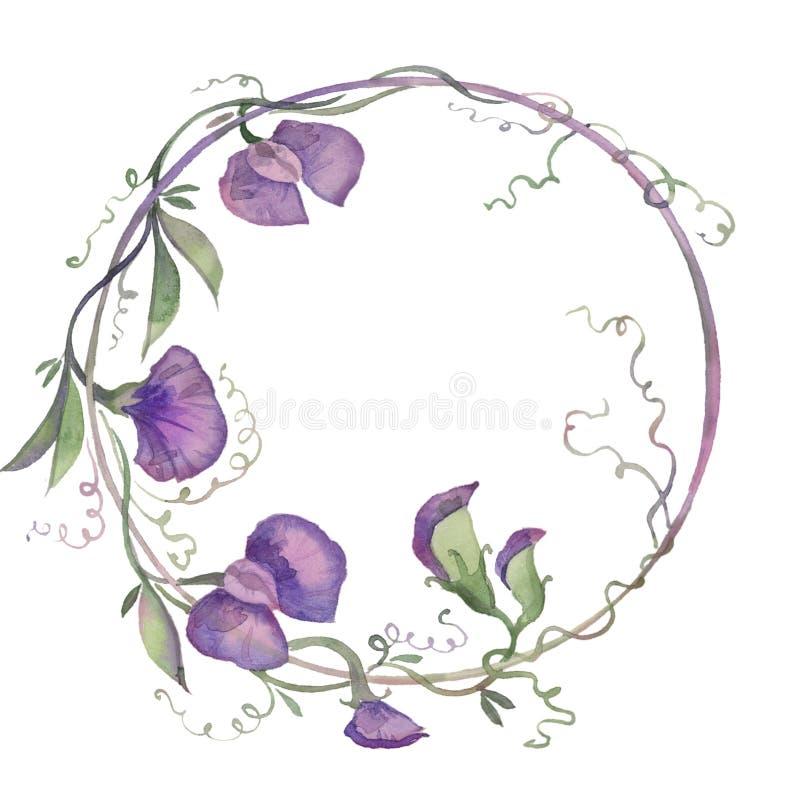 Watercolor απεικόνισης στεφανιών ευώδης ανθοδέσμη φύλλων λουλουδιών μπιζελιών πορφυρή στοκ εικόνες με δικαίωμα ελεύθερης χρήσης