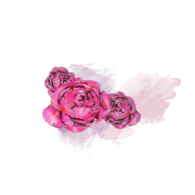 Watercolor αρώματος ελεύθερη απεικόνιση δικαιώματος