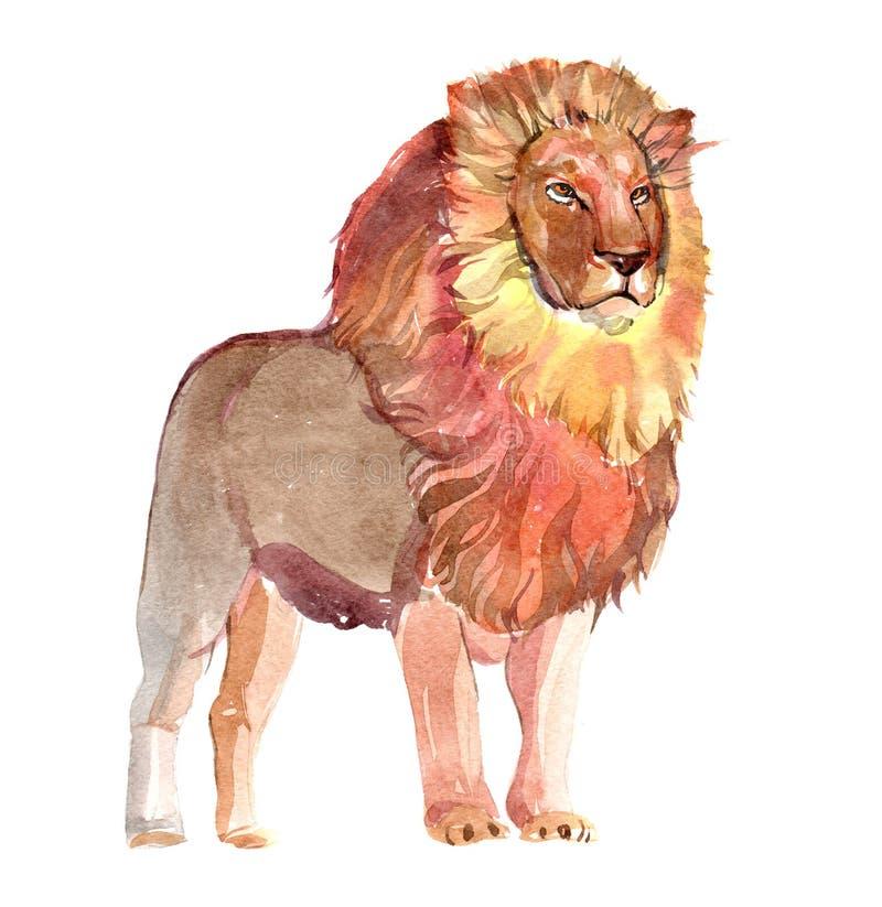 Watercolor ζωική απεικόνιση γατών λιονταριών αρσενική μεγάλη που απομονώνεται ελεύθερη απεικόνιση δικαιώματος