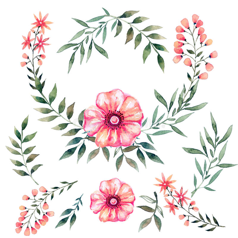 Watercolor που τίθεται με τα λουλούδια ελεύθερη απεικόνιση δικαιώματος