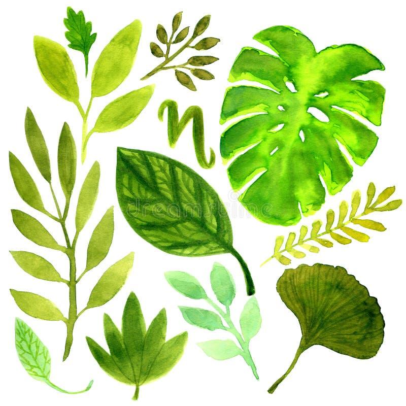 Watercolor που τίθεται με τα τροπικά φύλλα Διανυσματικό στοιχείο για το σχέδιό σας απεικόνιση αποθεμάτων