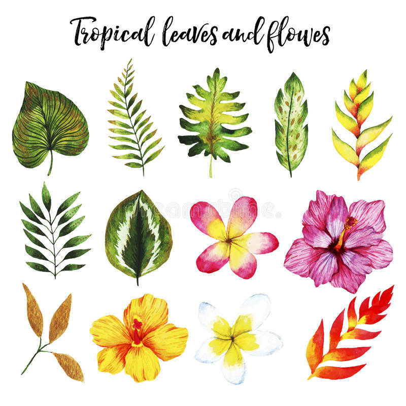 Watercolor που τίθεται με τα τροπικά φύλλα και τα λουλούδια στοκ εικόνες με δικαίωμα ελεύθερης χρήσης
