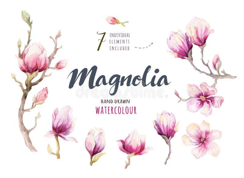 Watercolor που χρωματίζει τη διακόσμηση ταπετσαριών λουλουδιών ανθών Magnolia απεικόνιση αποθεμάτων