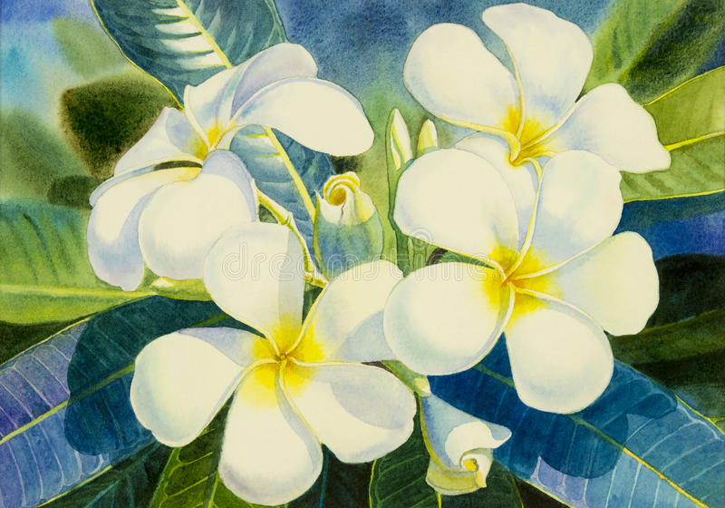 Watercolor που χρωματίζει το αρχικό ρεαλιστικό άσπρο λουλούδι του frangipani ελεύθερη απεικόνιση δικαιώματος