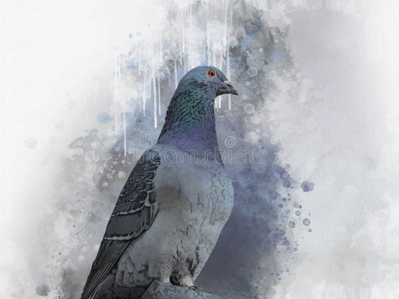 Πορτρέτο ενός πουλιού περιστεριών, ζωγραφική watercolor Απεικόνιση πουλιών διανυσματική απεικόνιση
