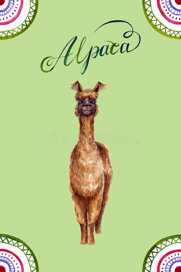 Watercolor alpaca with calligraphic inscription and ornament. Colorful illustration isolated on green. Hand painted animal. Perfect for kids poster, wallpaper stock illustration