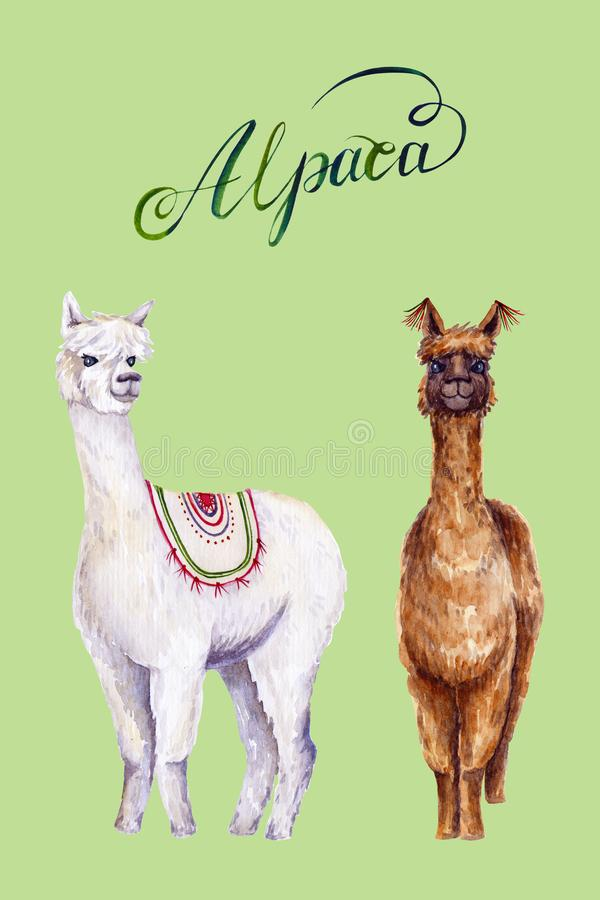 Watercolor alpacas with calligraphic inscription. Colorful illustration isolated on green. Hand painted animals. Perfect for kids poster, wallpaper, interior royalty free illustration