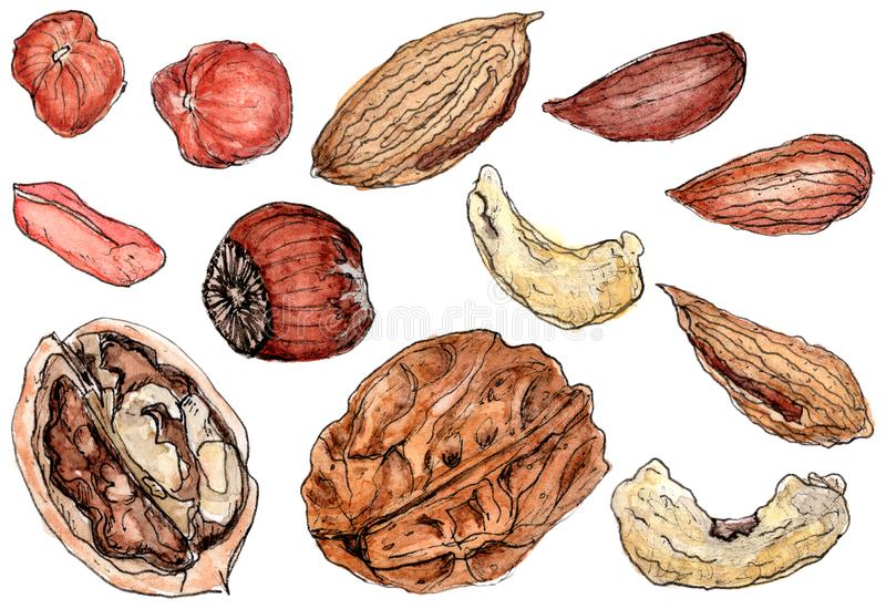 Watercolor appetizing nuts set on white stock images