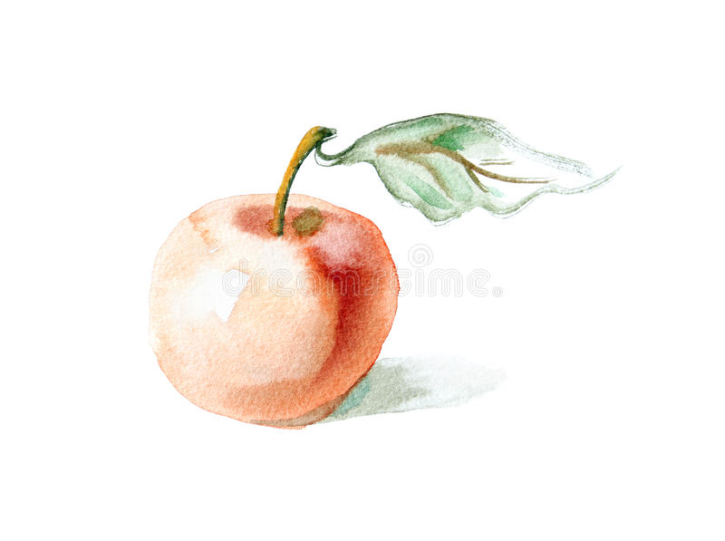 Watercolor -Apple- stock photography