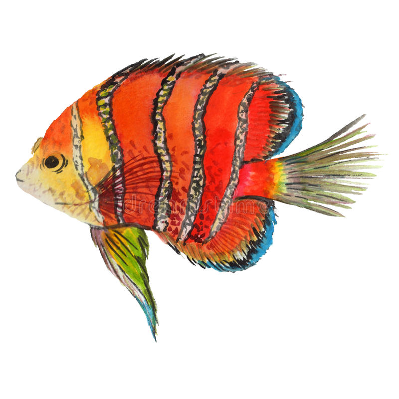 Watercolor aquatic underwater colorful tropical fish set. Red sea and exotic fishes inside. vector illustration