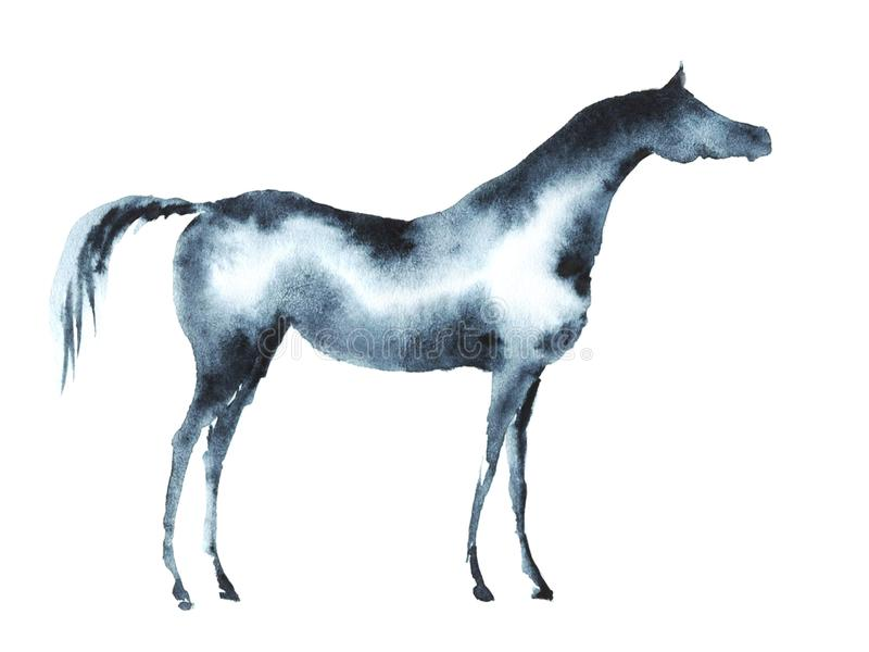 Watercolor arabian horse on white. royalty free illustration