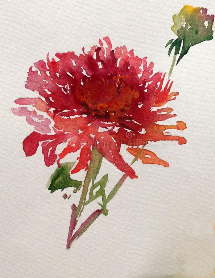 Watercolor art background colorful flower dahlia garden stock photography
