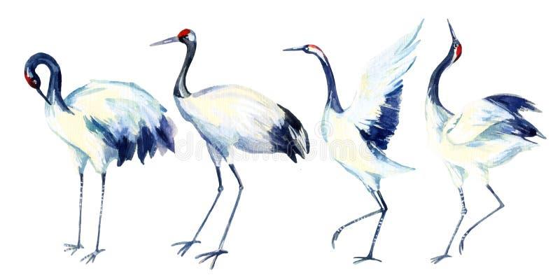 Watercolor asian crane bird set royalty free illustration