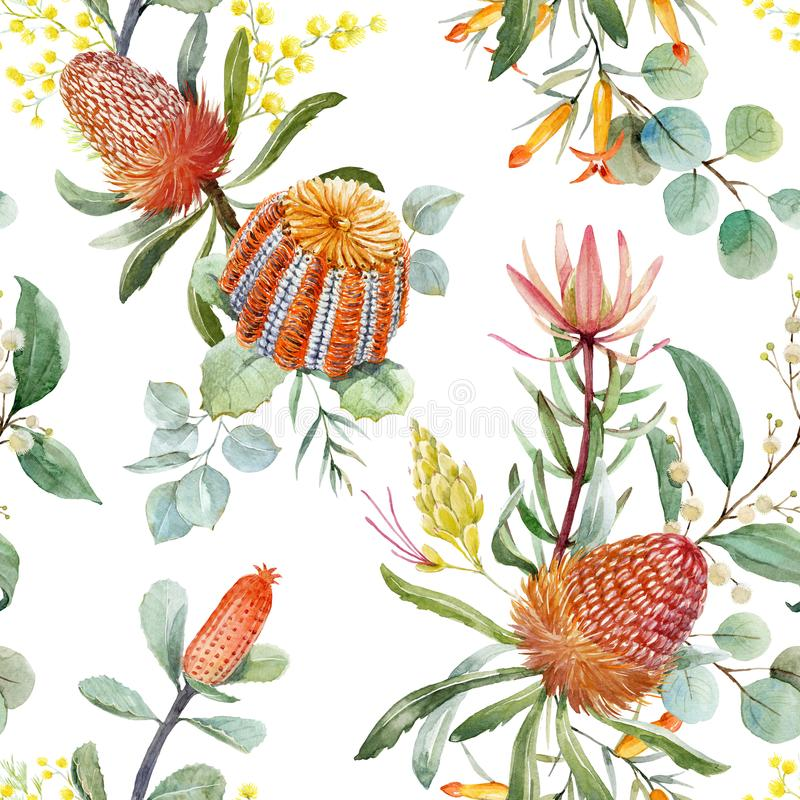 Watercolor australian banksia floral pattern vector illustration