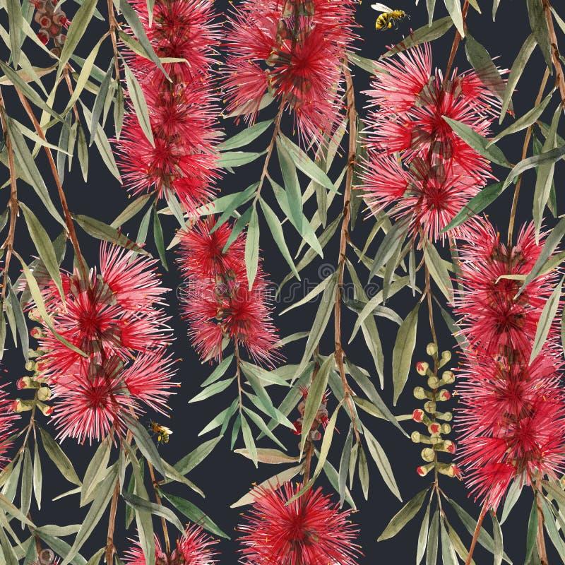 Watercolor australian callistemon seamless pattern stock illustration