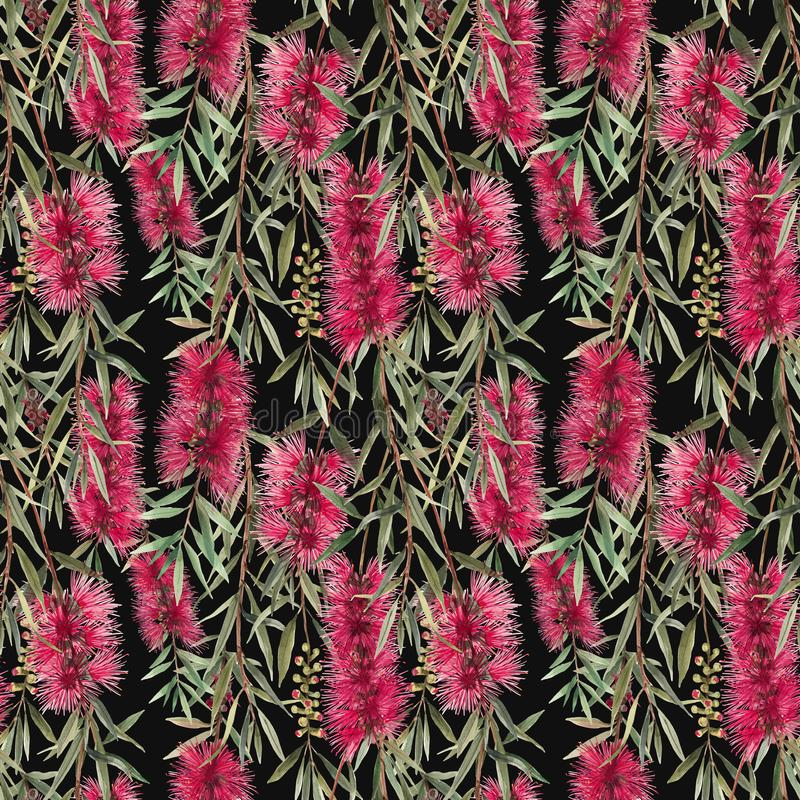 Watercolor australian callistemon seamless pattern royalty free illustration