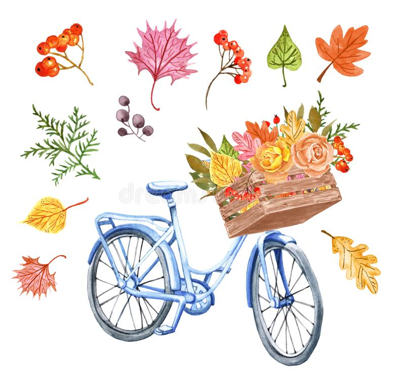 Watercolor autumn bicycle and colorful leaves in a wooden basket. Cute blue bike with fall foliage bouquet and roses on white. Watercolor blue bicycle and wood stock illustration