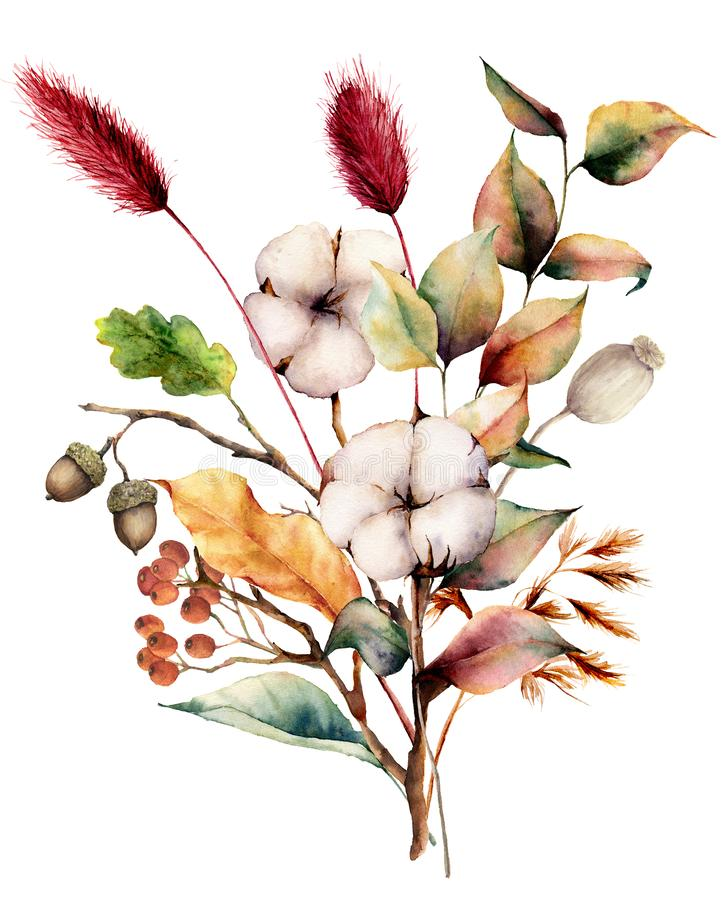 Free Watercolor Autumn Bouquet With Plants, Flowers And Berries. Hand Painted Cotton Flowers, Lagurus, Acorn, Leaves And Royalty Free Stock Image - 126262086