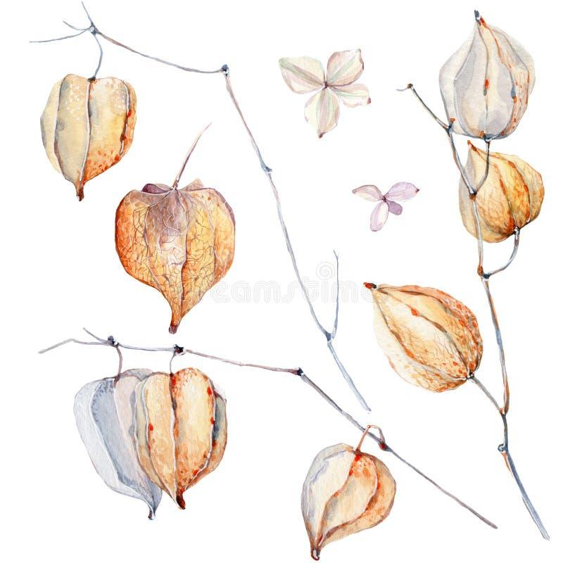 Watercolor autumn composition. stock illustration