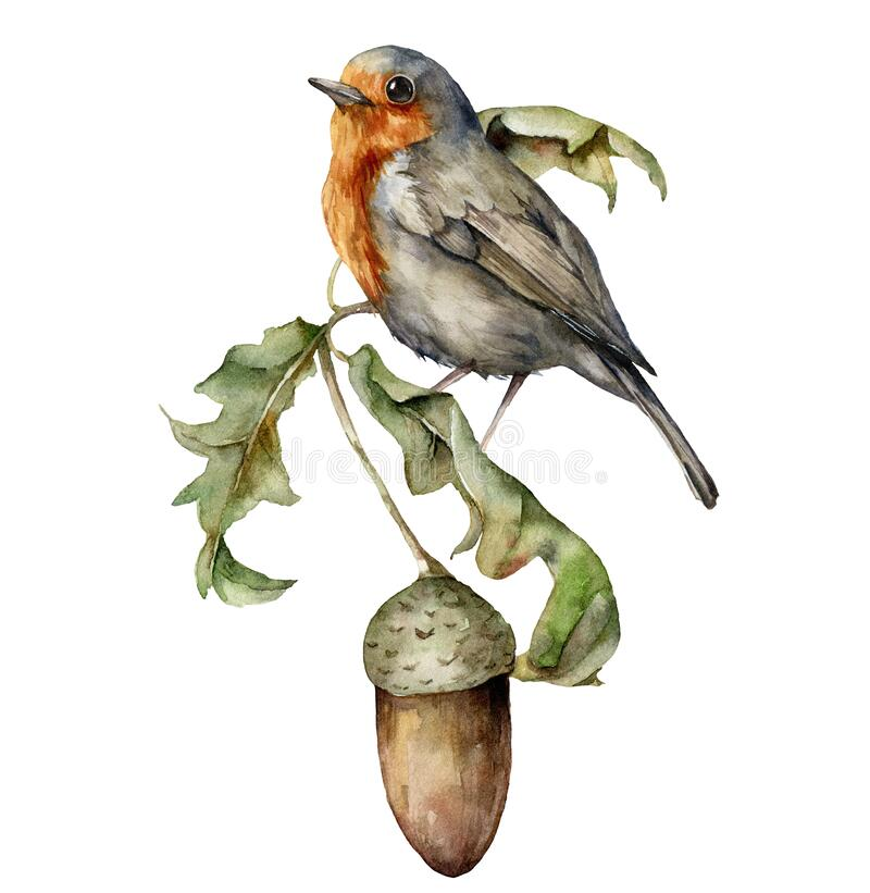 Free Watercolor Autumn Composition With Robin Redbreast And Acorn. Hand Painted Bird And Oak Leaves Isolated On White Stock Photos - 194882653