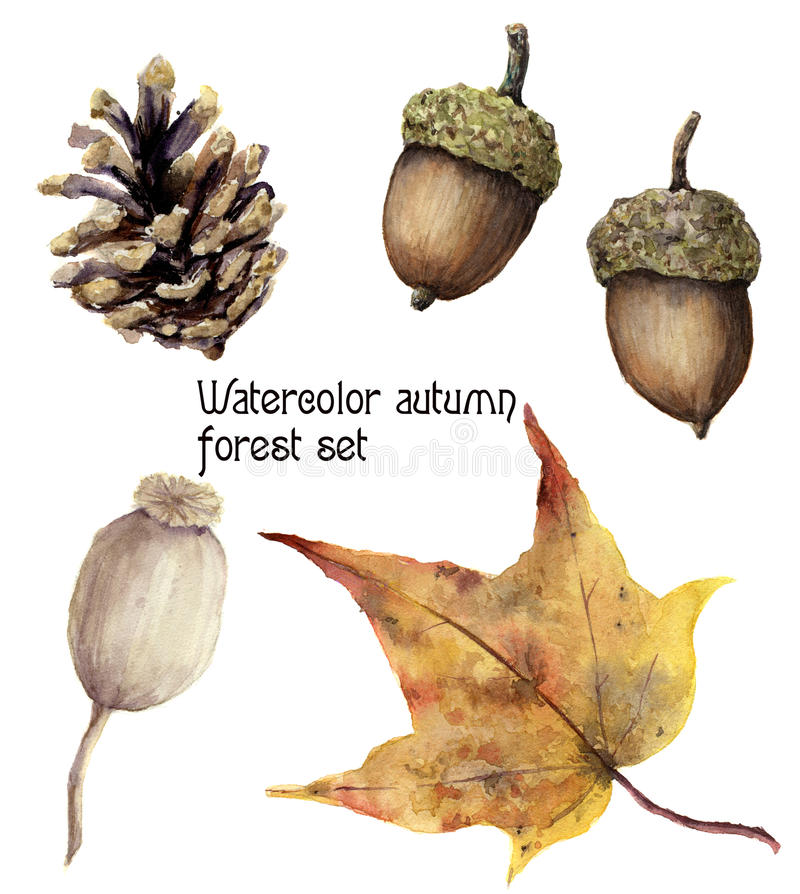 Watercolor autumn forest set. Hand painted pine cone, acorn, berry and yellow leave isolated on white background royalty free illustration
