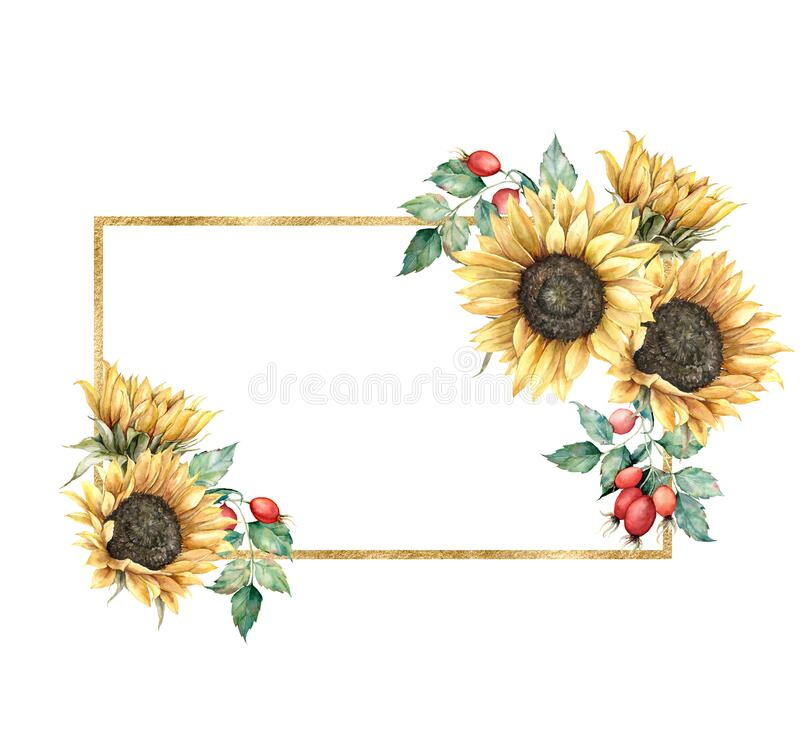 Free Watercolor Autumn Gold Frame With Sunflowers, Berries And Leaves. Hand Painted Rustic Card Isolated On White Background Stock Image - 194883371