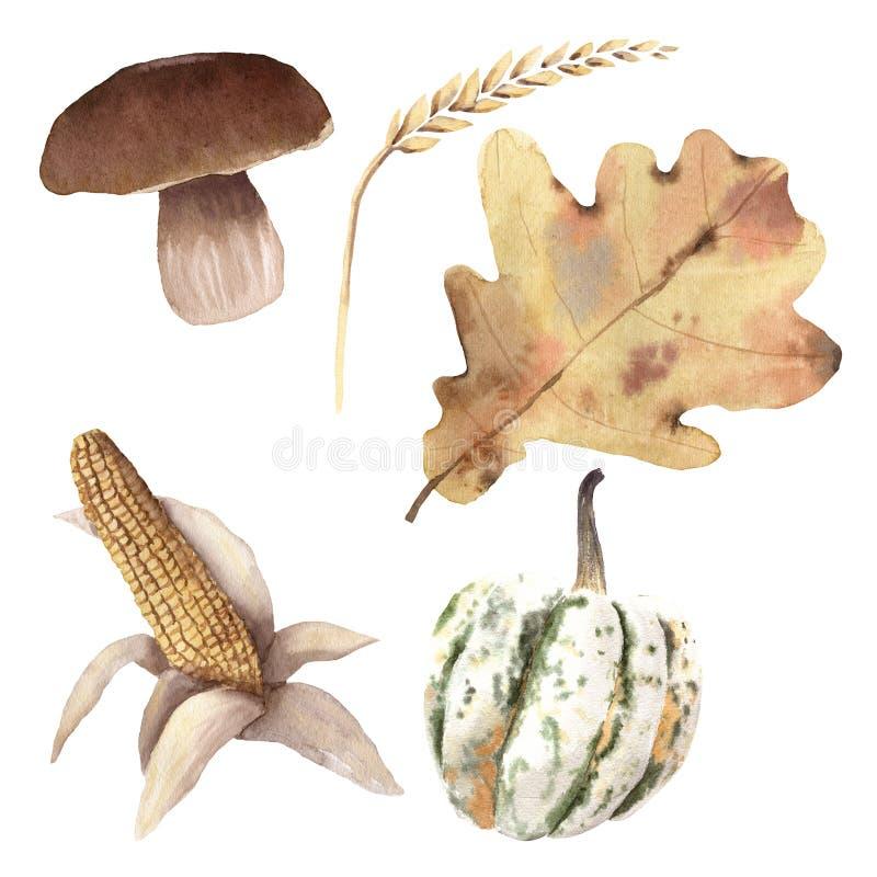 Watercolor Autumn Harvest Set Hand painted Objects Wheat mushroom leaf corn pumpkin vector illustration