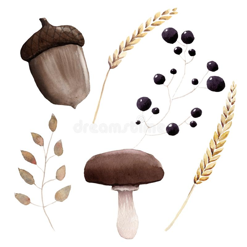 Watercolor Autumn Harvest Set Hand painted Objects Wheat mushroom berries branch with leaves vector illustration