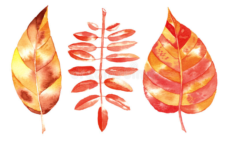 Watercolor autumn leaf stock illustration