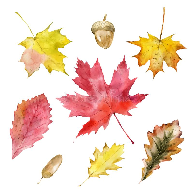 Watercolor autumn leaves or fall foliage icons. Vector isolated set of maple, oak, birch tree leaf. Falling poplar, beech. Illustration for greeting cards royalty free illustration