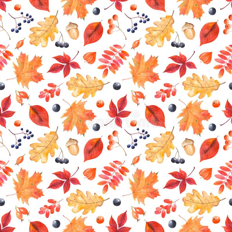 Watercolor autumn pattern with colorful leaves and berries. royalty free illustration