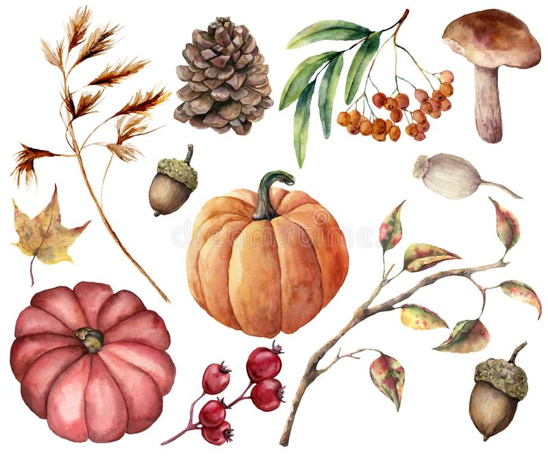 Watercolor autumn plants set. Hand painted pumpkins, leaves, mushroom, rowan, apple, cone, acorn isolated on white. Background. Floral illustration for design royalty free illustration