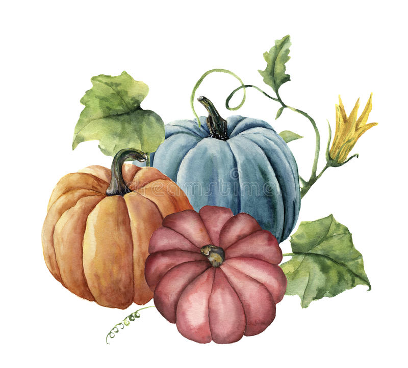 Watercolor autumn pumpkins. Hand painted bright pumpkins with leaves and flowers isolated on white background. Botanical royalty free illustration