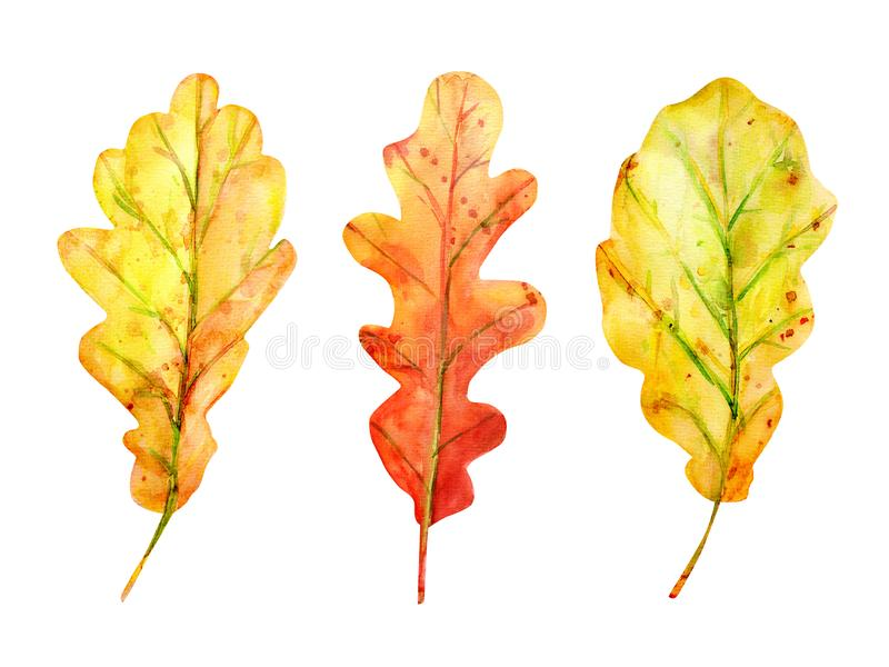 Watercolor autumn set with oak leaves stock images
