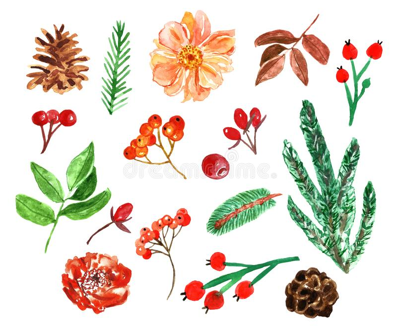Watercolor autumn set with plants, pine branches, flowers, leaves, berries. Nature elements on white backhround stock illustration