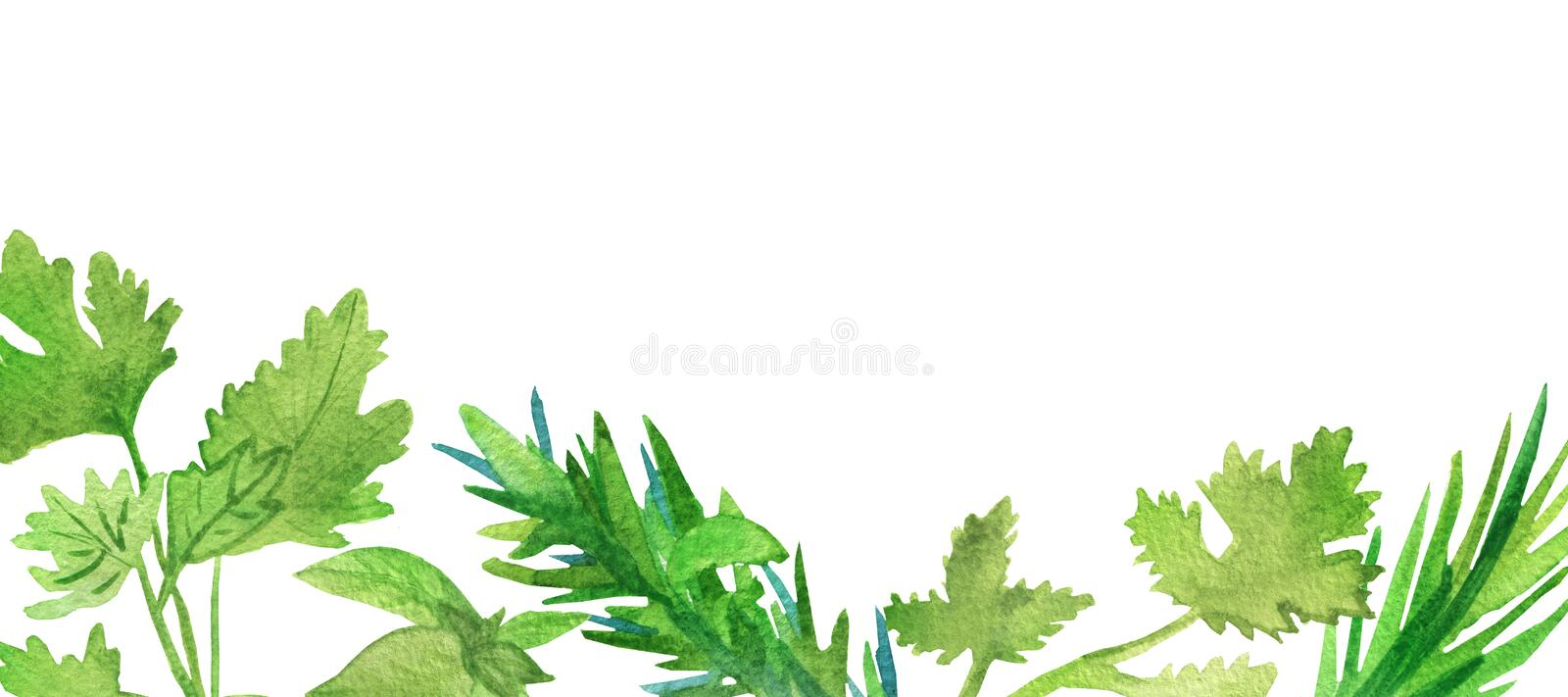 Watercolor banner of spicy plants. Green seasoning plants isolated on white background. Spicy herbs: coriander, rosemary, parsley. Marjoram, for beautiful stock illustration