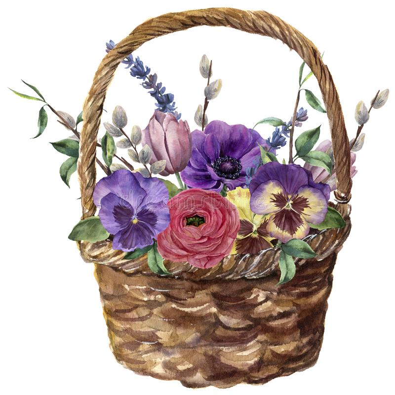 Watercolor basket with flowers. Hand painted tulip, pansies, anemone, ranunculus, willow, lavender and tree branch with. Leaves isolated on white background royalty free illustration