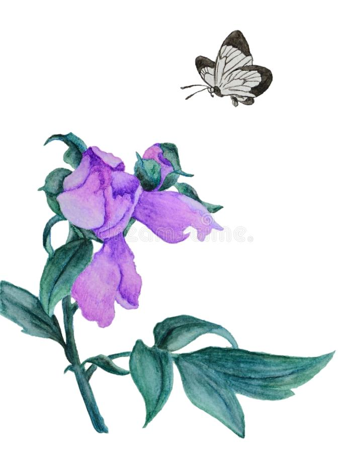 Watercolor beautiful lilac flower. Watercolor illustration with a beautiful lilac flower. These are lilac exotic flower with green foliage and bud. Butterfly vector illustration