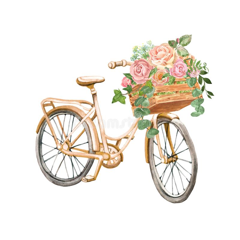 Watercolor beautiful peach pink bicycle and pretty rose flowers in a wooden garden box, isolated. Romantic vintage bike stock illustration