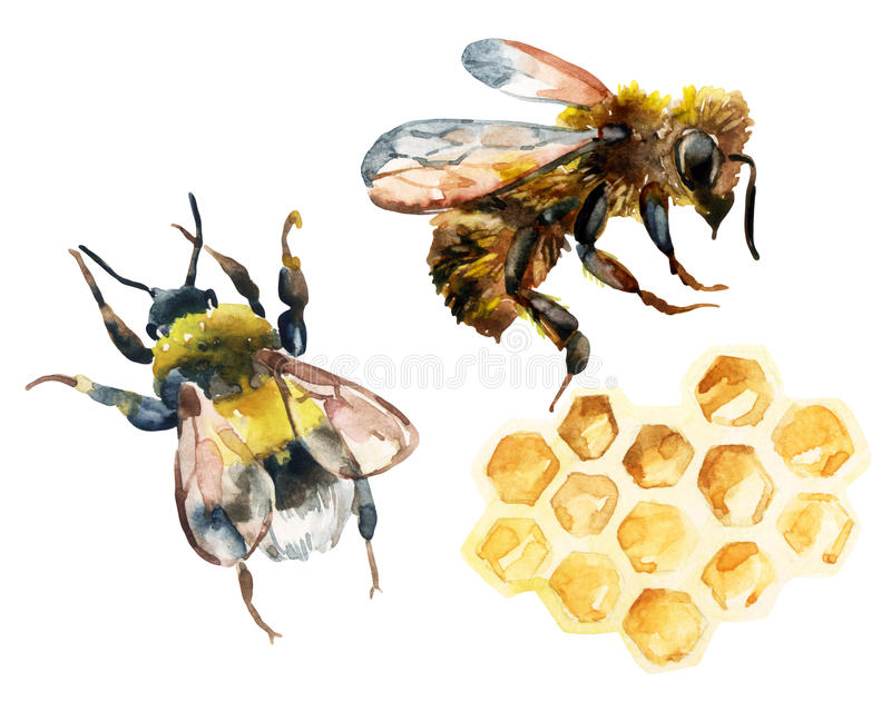 Watercolor bee, bumble bee and honeycomb set royalty free illustration