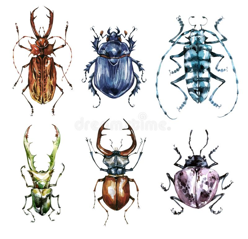 Watercolor beetles collection on a white background. Animal, insects. Entomology. Wildlife. Can be printed on T-shirts royalty free illustration