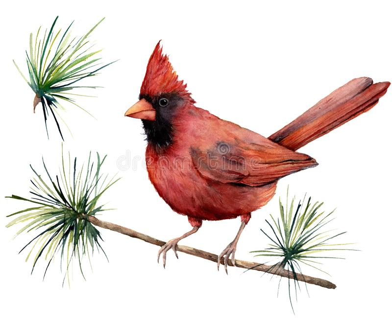 Watercolor bird cardinal. Hand painted greeting card illustration with red bird and branch isolated on white background. For design, print or background stock illustration