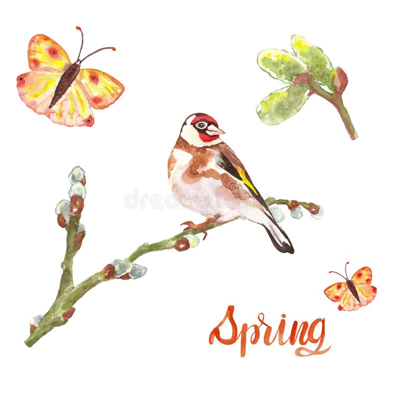 Watercolor spring bird goldfinch on willow tree branch, buds and colorful flying butterfly, isolated. stock photos
