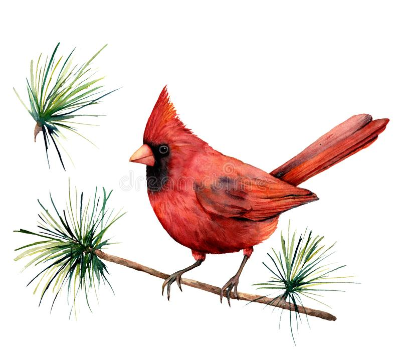 Watercolor bird red cardinal. Hand painted greeting card illustration with bird and branch isolated on white background. For design, print or background stock illustration