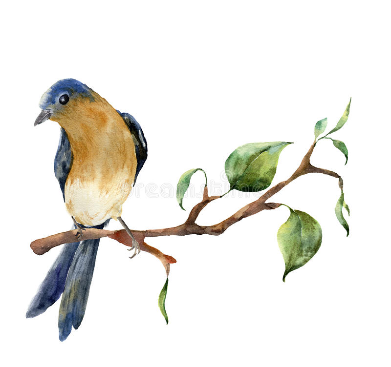 Free Watercolor Bird Sitting On Tree Branch With Leaves. Hand Painted Spring Illustration With Robin Redbreast Isolated On Stock Images - 85560374